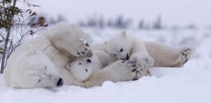 Polar Family Playtime